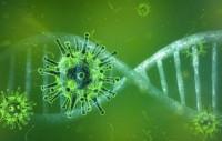 Bild Corona-Virus